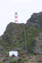 252 steps up to Cape Palliser lighthouse