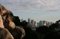 Goat and city at Taronga zoo